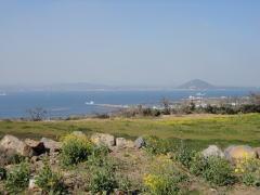 済州道の牛島