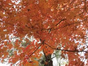韓国旅行 紅葉