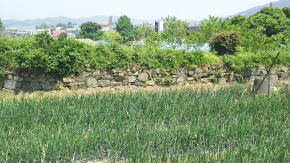 韓山の周留城跡