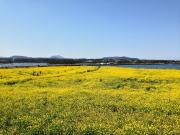 おすすめ韓国 済州島