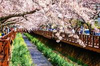 韓国春のお祭のおすすめ