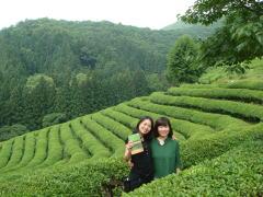 宝城の茶畑