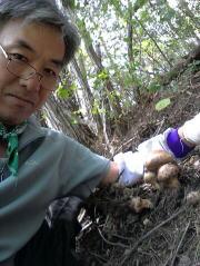 韓国 松茸狩り