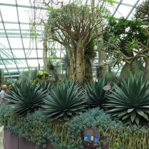 日本では見られない植物も